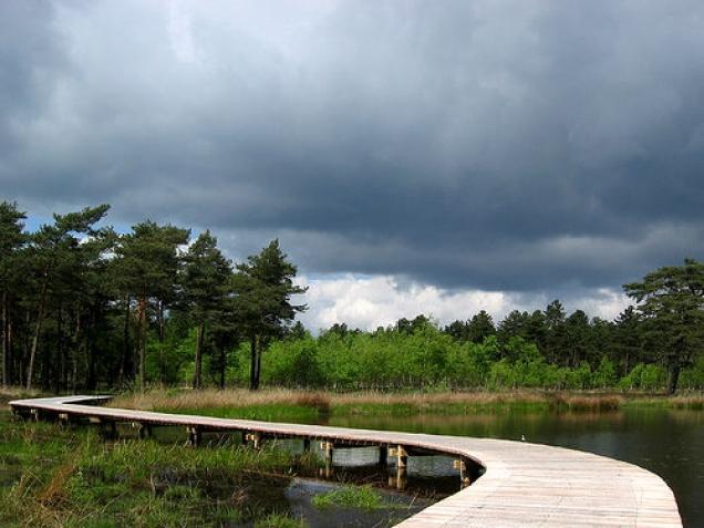 Parque Nacional De Hoge Veluwe.
