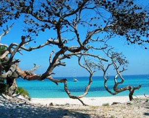 El lado salvaje de la isla aflora en cualquier rinc�n, ya sea mar o monta�a.