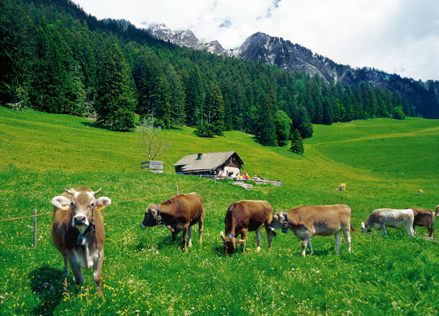 El buc�lico paisaje alpino de Heidi, junto a unas instant�neas de la nueva pel�cula y souvenirs centrados en el personaje.