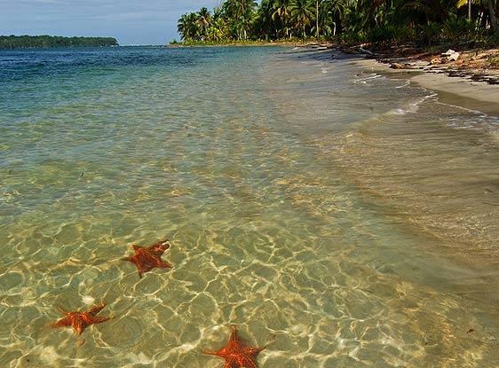 La playa de las estrellas (de mar)